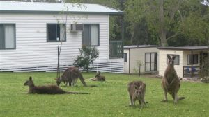 Halls Gap Caravan Park - Sunshine Coast Tourism