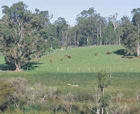 Scenic Drives - Bunbury Collie Donnybrook - Sunshine Coast Tourism