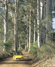 Mount Shadforth Scenic Drive - Sunshine Coast Tourism