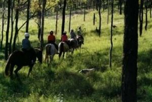 Hunter Valley Horse Riding and Adventures - Sunshine Coast Tourism