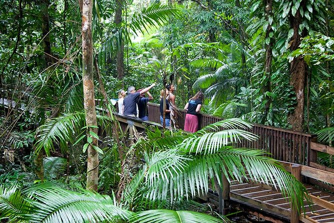 Full Day Daintree Rainforest and Mossman Gorge Tour - Sunshine Coast Tourism