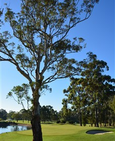 Ryde-Parramatta Golf Club - Sunshine Coast Tourism