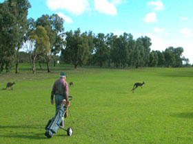 Coffin Bay Golf Club - Sunshine Coast Tourism