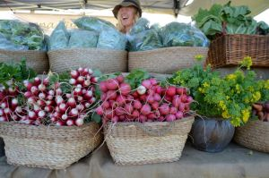 Berry Farmers' Market - Sunshine Coast Tourism