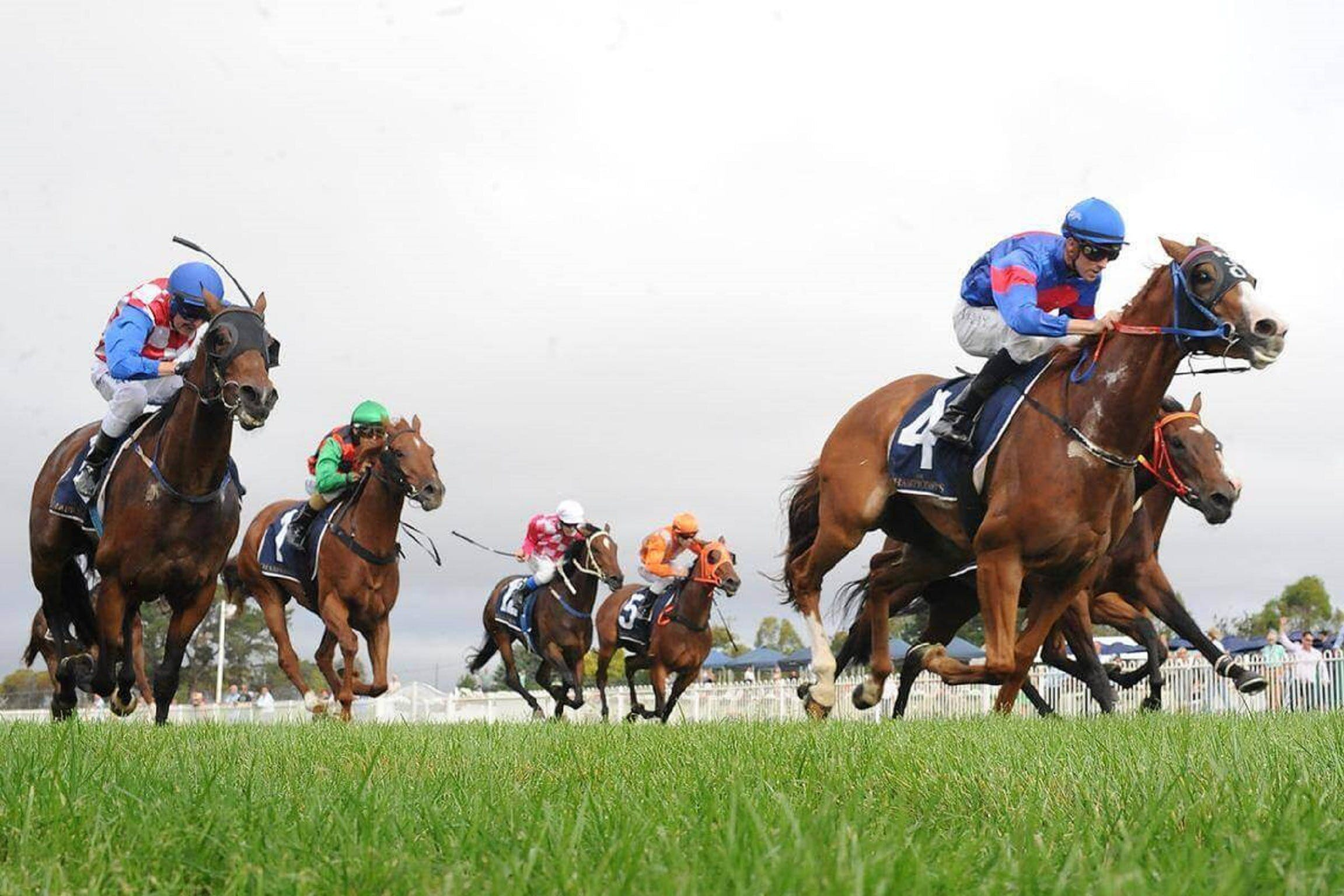 Christmas Cup Race Day - Sunshine Coast Tourism