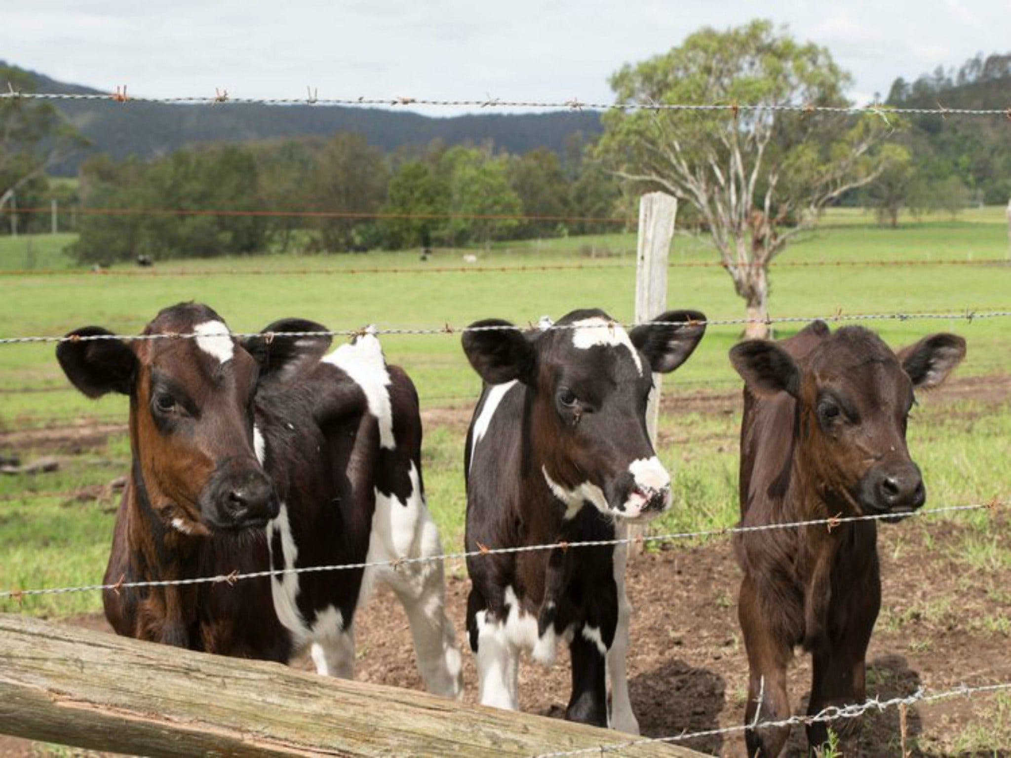 Bandon Grove Farm Tours - Sunshine Coast Tourism