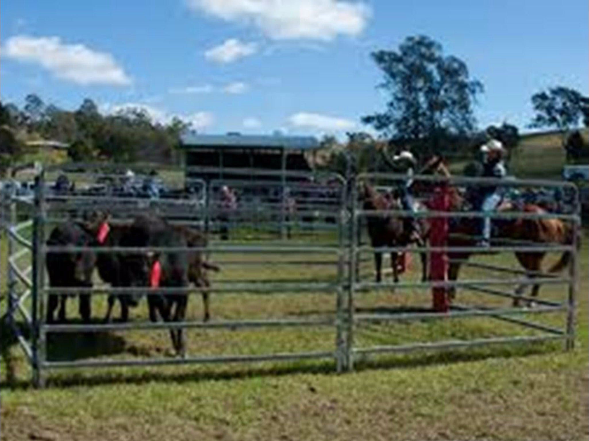 Dungog Team Penning - Sunshine Coast Tourism