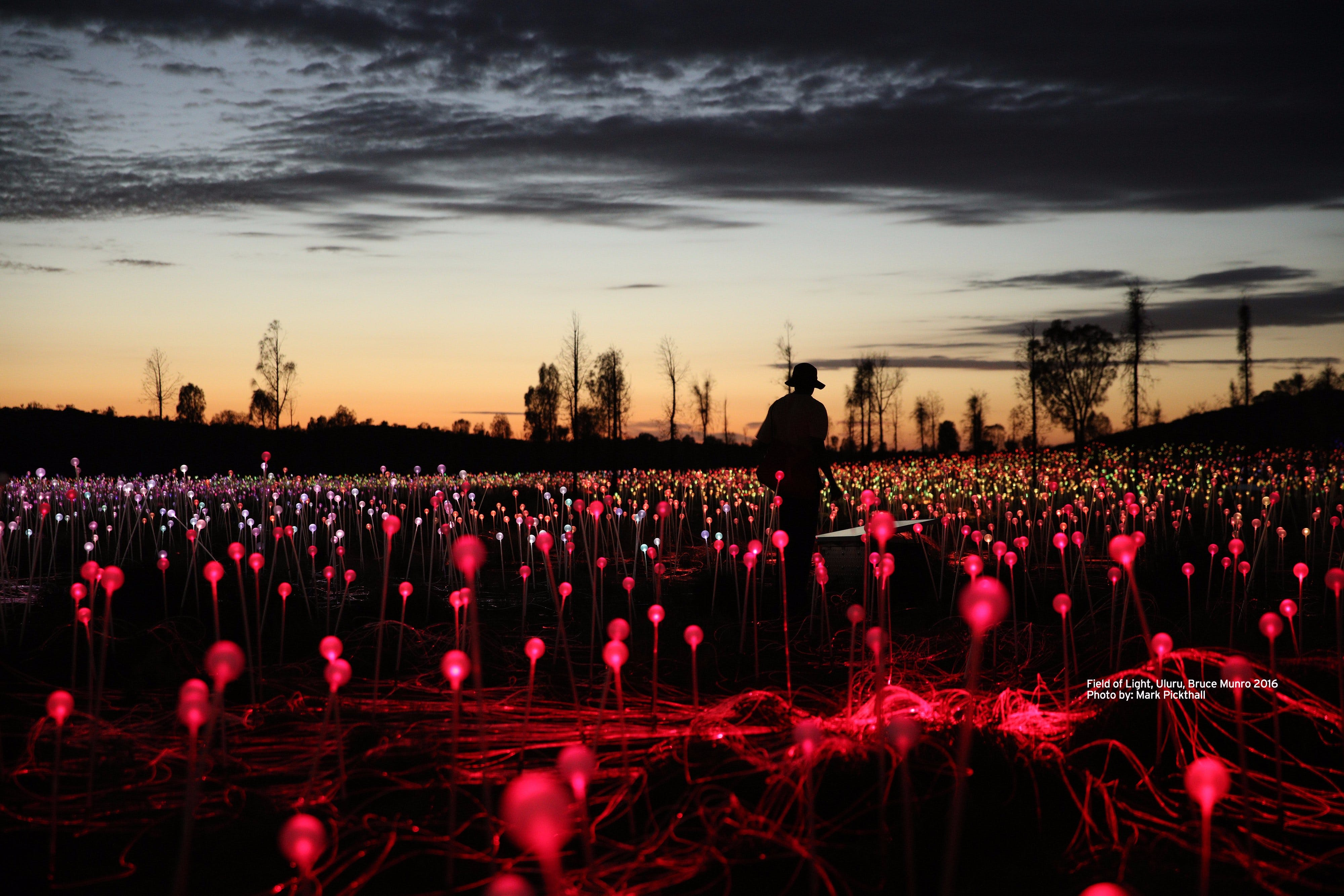 Field of Light Uluru - Sunshine Coast Tourism