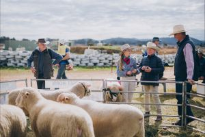 Mudgee Small Farm Field Days - Sunshine Coast Tourism