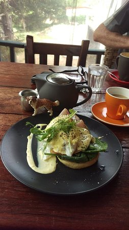 Brook  Cafe - Sunshine Coast Tourism