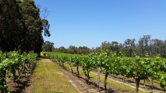 Stringybark Cottage Winery  Restaurant - Sunshine Coast Tourism