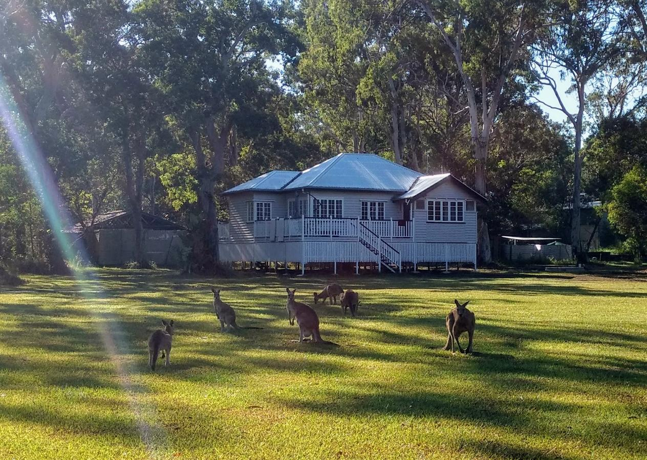 Lake Weyba Noosa Lodge  Kangaroos - Sunshine Coast Tourism